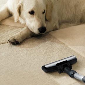 Vacuum Tube And Dog