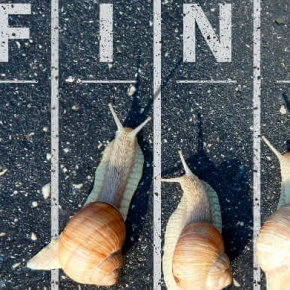 Finish Line And Snails