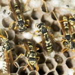 Winterise Your Home to Protect from Pests