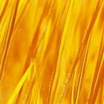 Got Yellow Grass?