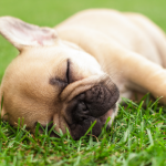 Dog Proof Your Lawn
