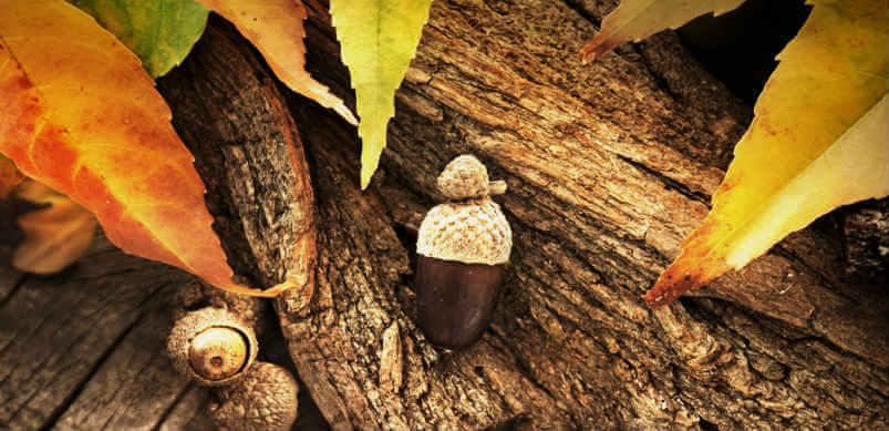 Autumn Acorn Leaves And Bark