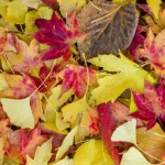Essential Autumnal Tasks for the Home and Garden