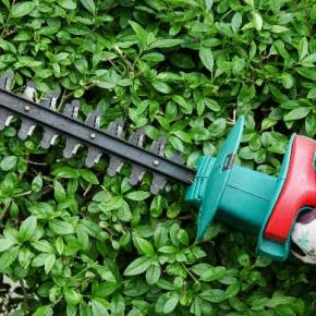 Cutting The Hedge