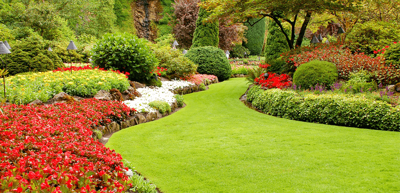 3 key steps to help you achieve a beautiful lawn espares for Help design my garden