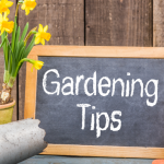 20 Simple Gardening Tips to Save You Money