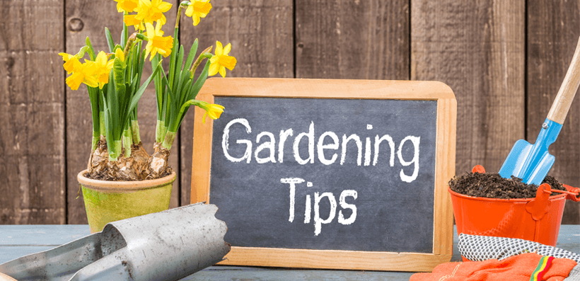 20 simple gardening tips to save you money espares for Gardening tips colorado