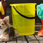 Time Saving Cleaning Tips For Dog Lovers!