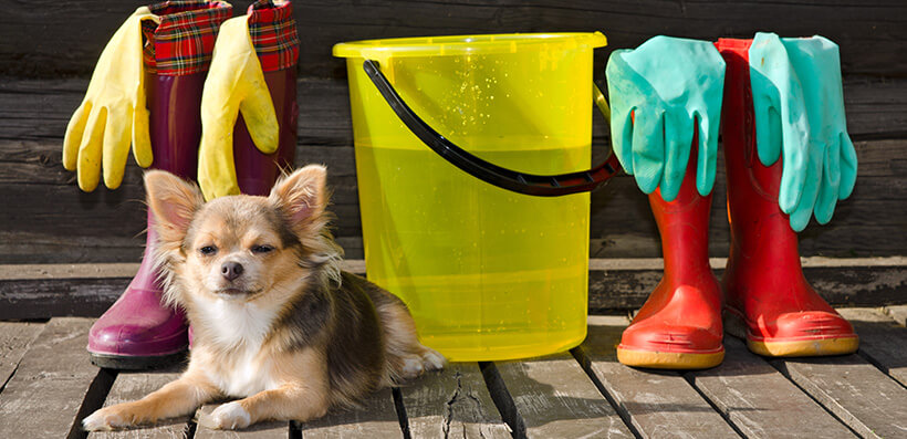 Dog With Cleaning Products