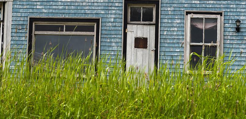 Overgrown Long Grass Outside House