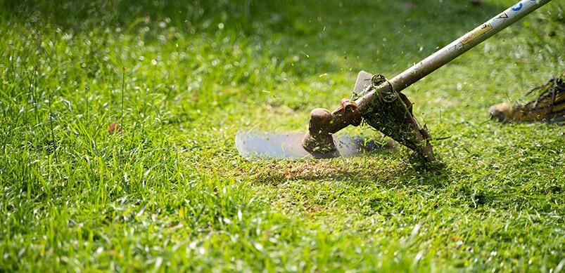 Strimmer Cutting Grass Short