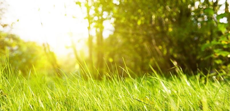 Long Grass In Sunshine
