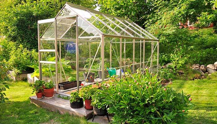 Garden Greenhouse In Summer