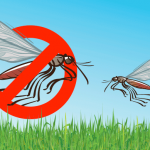How to Avoid Pesky Summer Pests