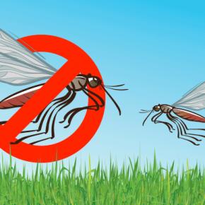 Mosquitos Flying In Garden