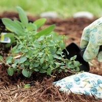 Planting Herbs In Garden
