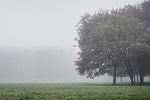Misty Damp Weather Outdoors