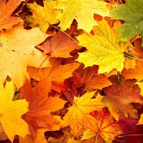 Autumn Garden Leaves In Pile
