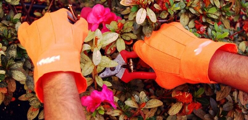 Autumn Bush Getting Pruned