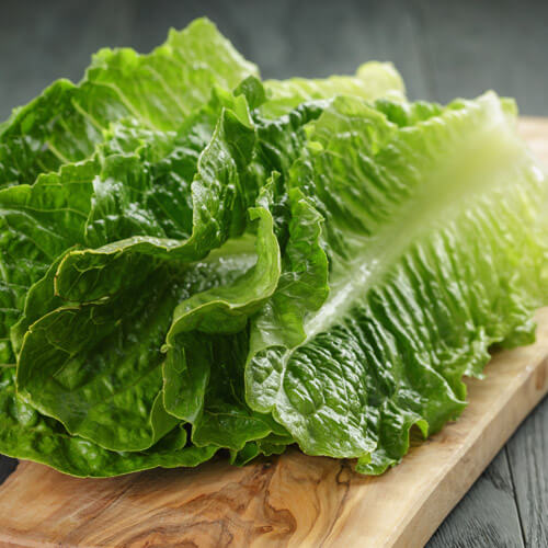 Iced Gem Lettuce On Board