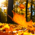 5 Super Effective Ways to Tackle Pesky Autumn Leaves