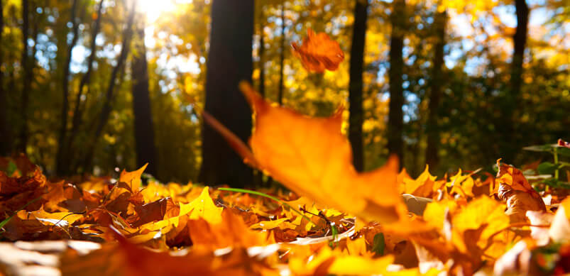 Autumn Leaves Falling On Ground