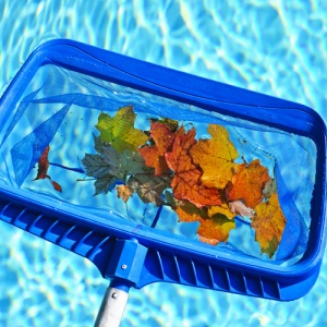 Net Skimming Leaves From Pool