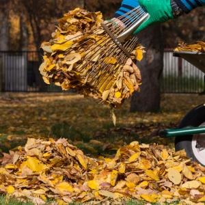 Raking Up Garden Leaves
