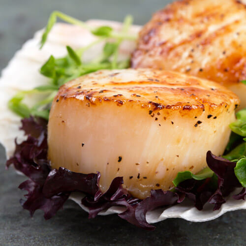Large Plump Seared Scallops