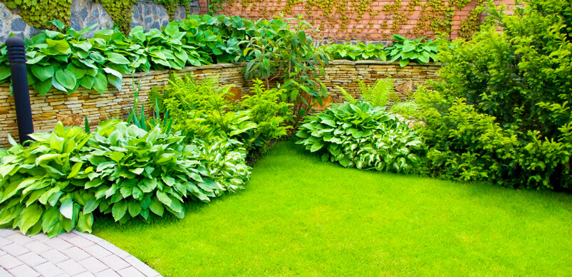Green Well Maintained Back Garden