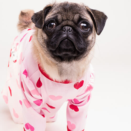 Pug Wearing Heart Onesie