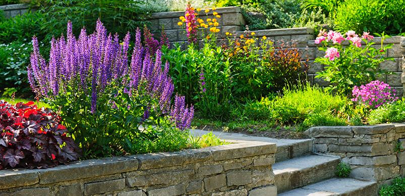 English Garden In Sunshine