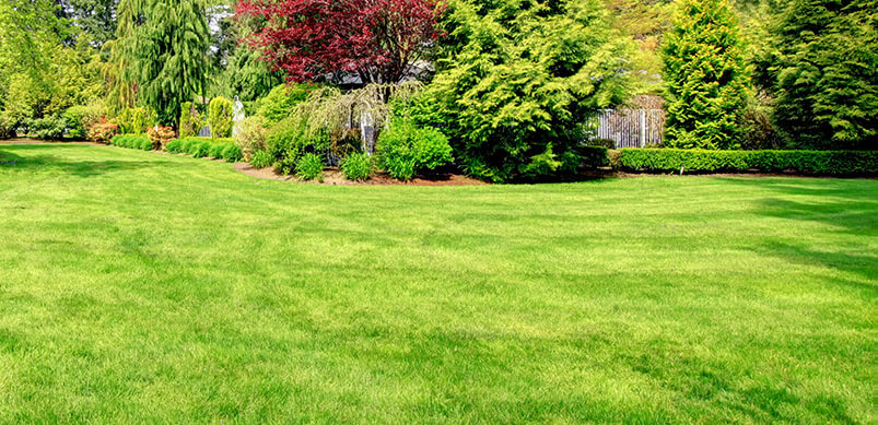 Green Lawn Surrounded By Trees