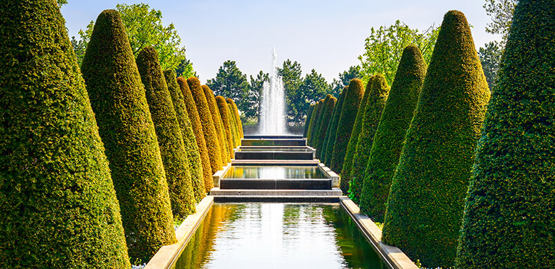 Manicured Hedges In A Row