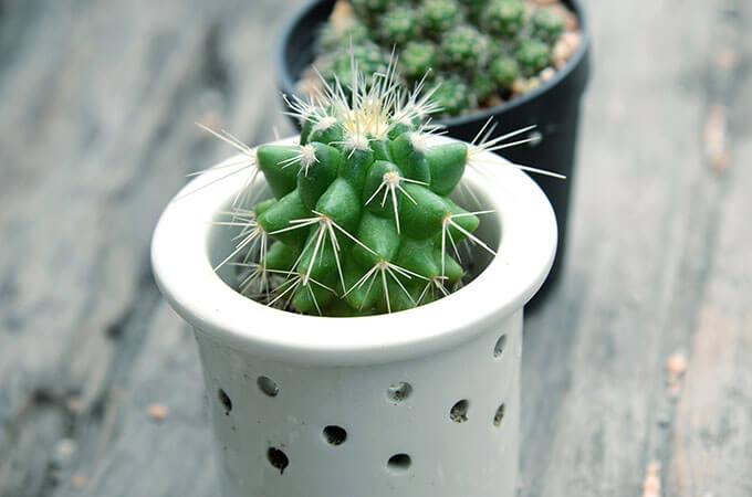 Cactus In Decorated Pot