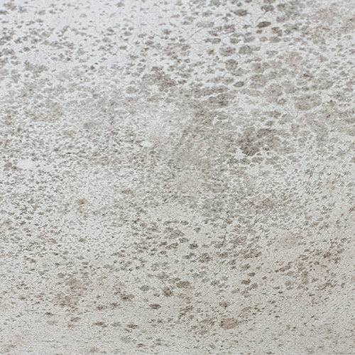 Mould Stains On white Surface
