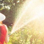 How Often Should You Water Your Plants?