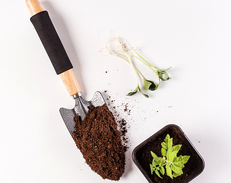 Young Tomato Seedling And Trowel