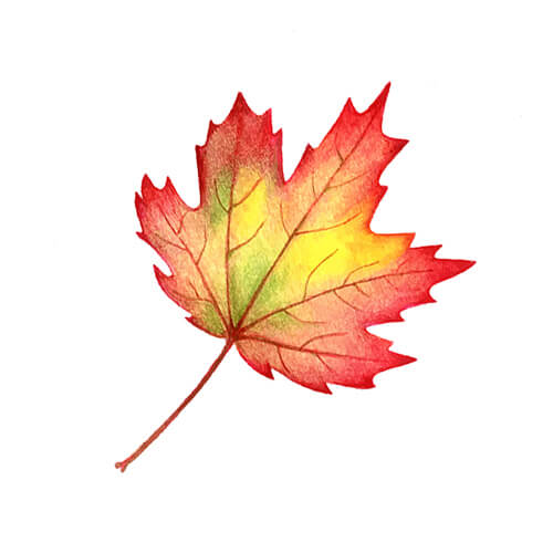 Red Autumn Leaf Illustration