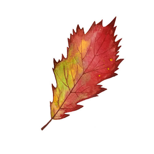 Single Autumn Leaf Illustration