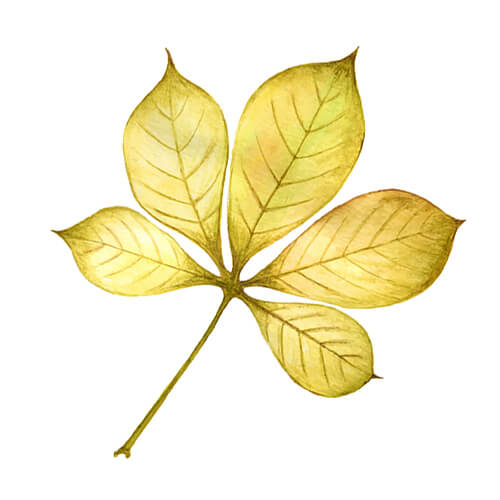 Yellow Illustration Of Leaves