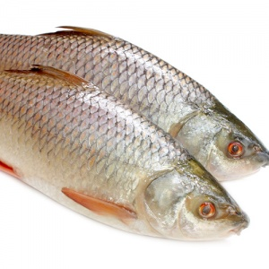 Two Raw Fish On White Background