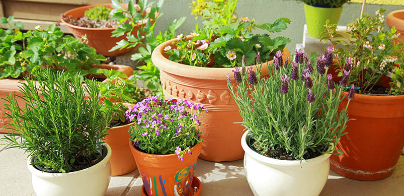 Terrace Garden With Potted Plants