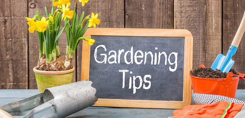 Garden Equipment And Flowers And Gardening Tips Sign