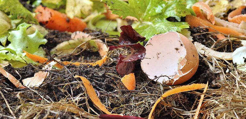 Egg Shells And Food Waste In Soil