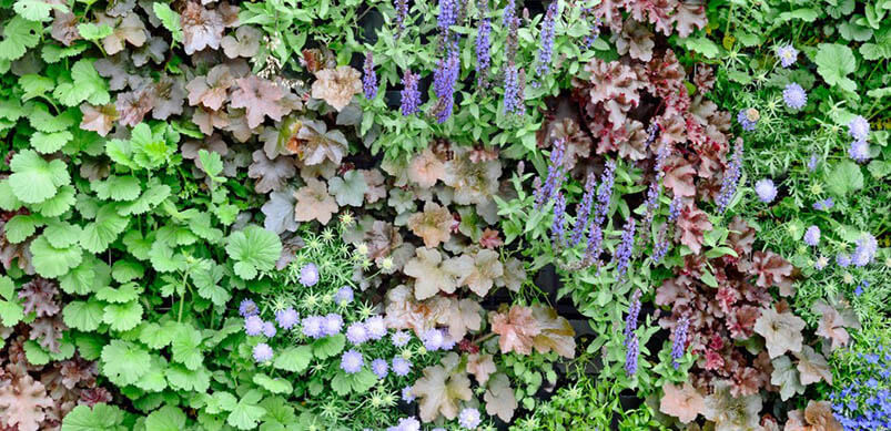 Living Wall In Garden With Colourful Flowers