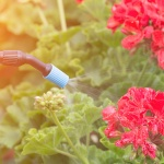 How to Rid Your Garden of Unwanted Pests
