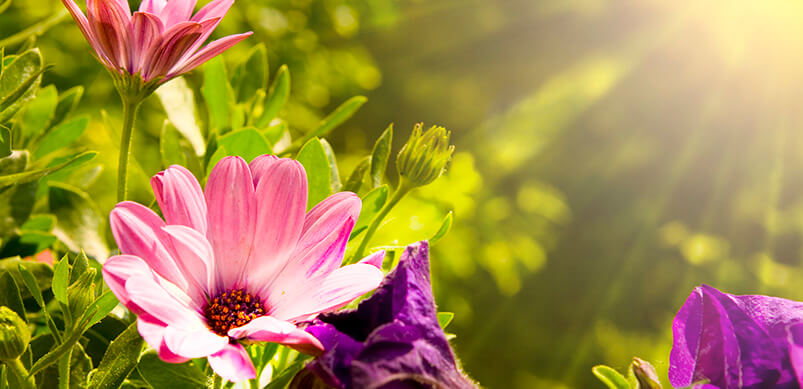 Sunrise Over Colourful Flowers
