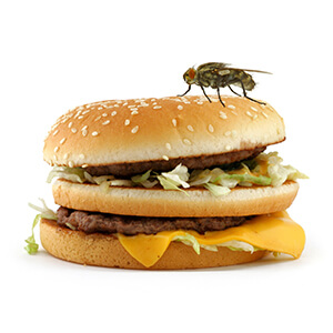 Fly On Top Of Burger