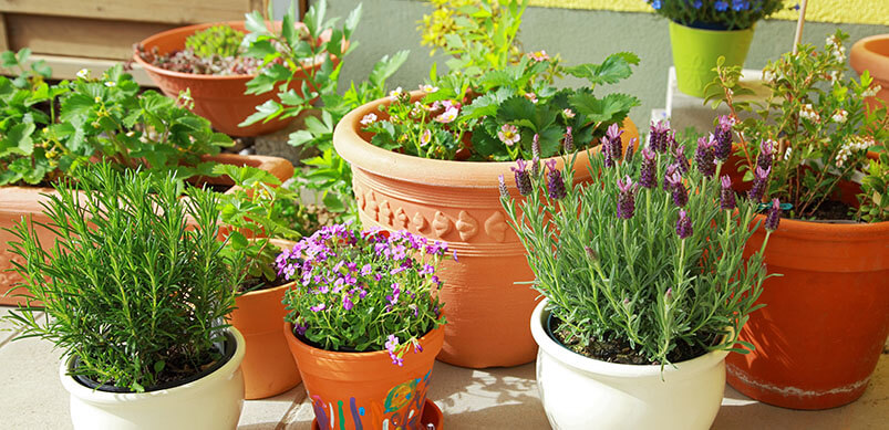 Potted Plants On Terrace